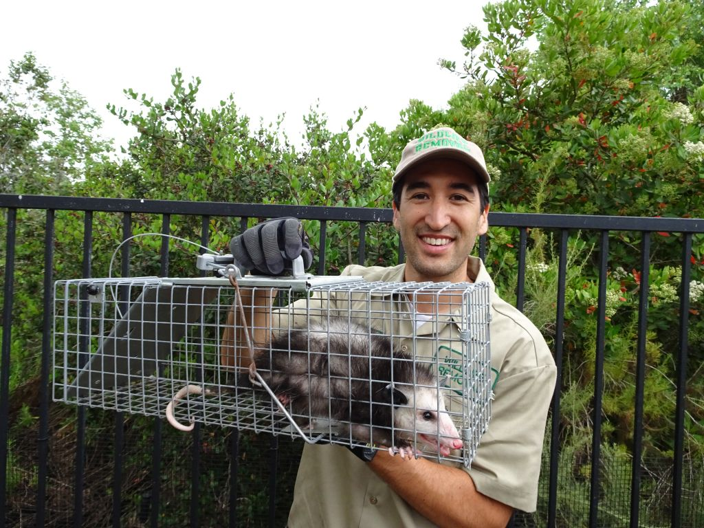 Opossum Removal Team